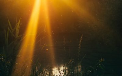 Learning to Love Yourself: Tools & Inspiration for the New Moon in Leo