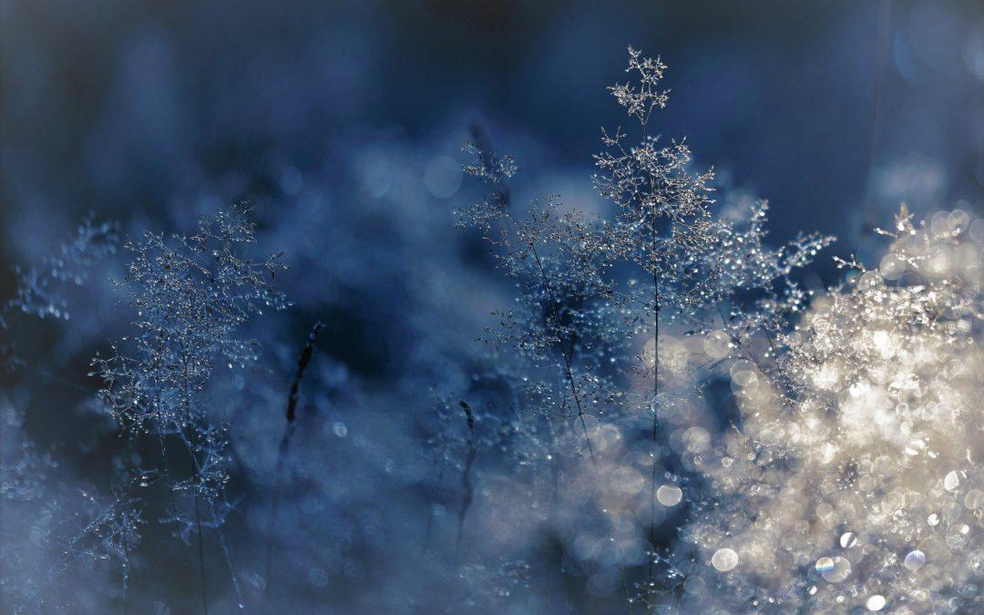 Finding Wisdom in My Internal Winter ~ Amanda Petrocelly